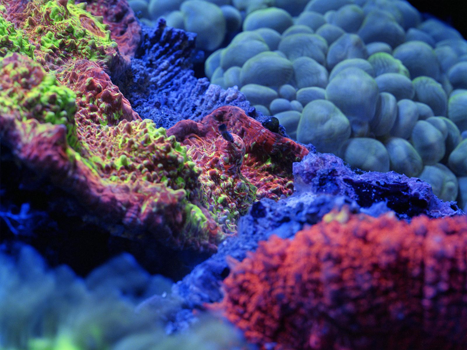 Fluorescine — © 2014, Charles Negre
