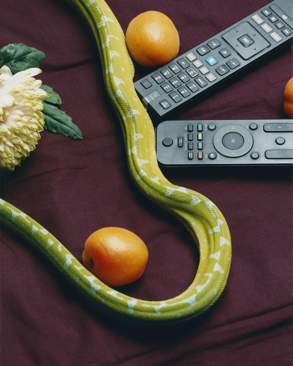 Deadly Pets — © , Charles Negre